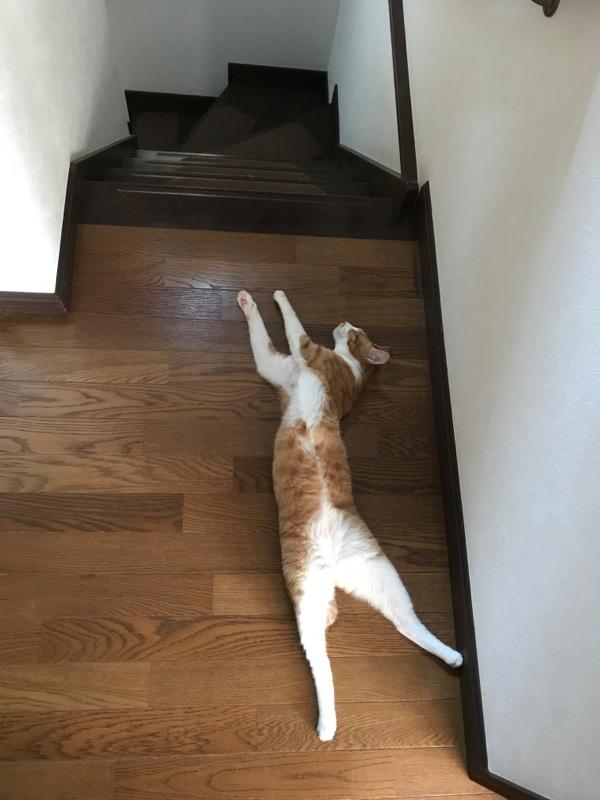 猫のひらき